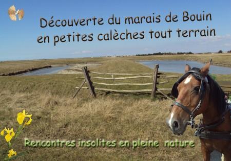 Marais de Bouin en calèche_modifié-2