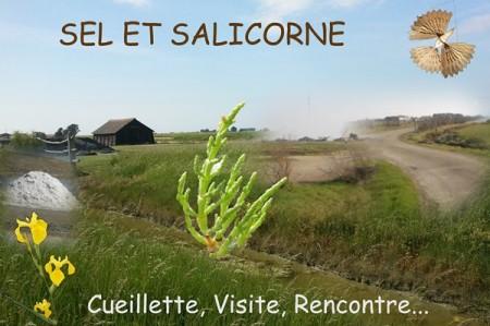 Sel et Salicorne 600