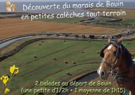 Marais de Bouin en calèche 2 balades (Copier)